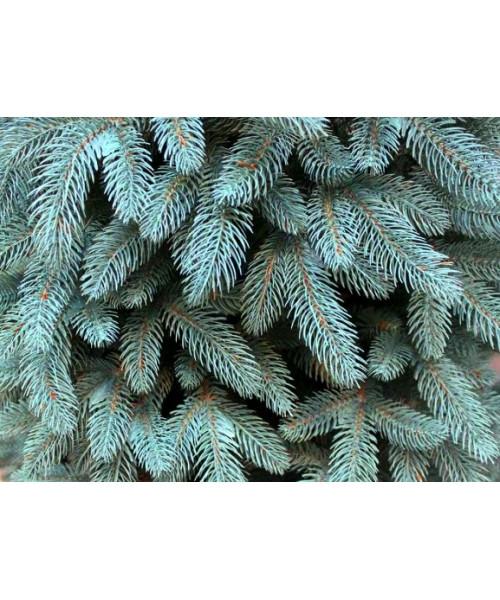 Елка искусственная Буковельская голубая литая 1,8 м